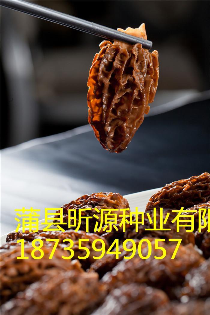 隰縣野生羊肚菌|臨汾劃算的野生羊肚菌批售