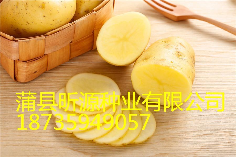 蒲縣昕源種業野生羊肚菌品質好-山西土豆種子代理加盟