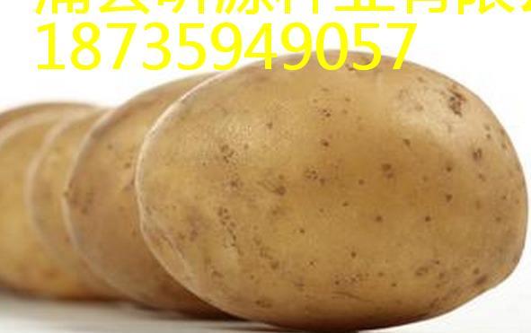 山西優良土豆種子供應商-吉林土豆種子