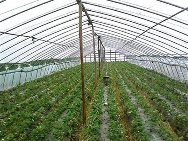 青州棚膜加工――雪峰塑料厂供应好用的农膜