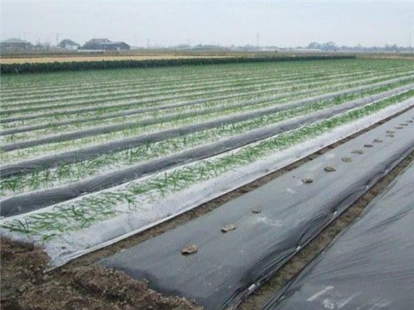 雪峰塑料厂-知名的葡萄专用膜供应商――质量好的葡萄专用膜