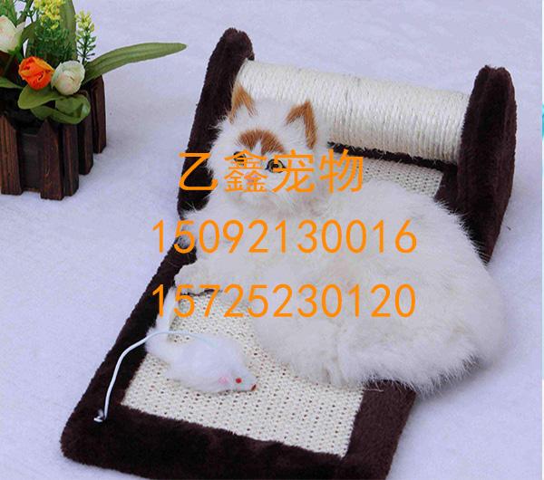 西海岸新区宠物医院 乙鑫宠物医院电话:15092130016