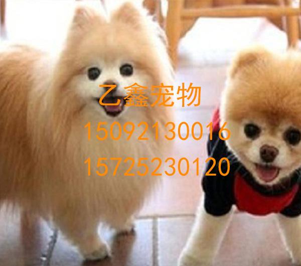 黄岛24小时宠物医院 乙鑫宠物医院电话15725230120