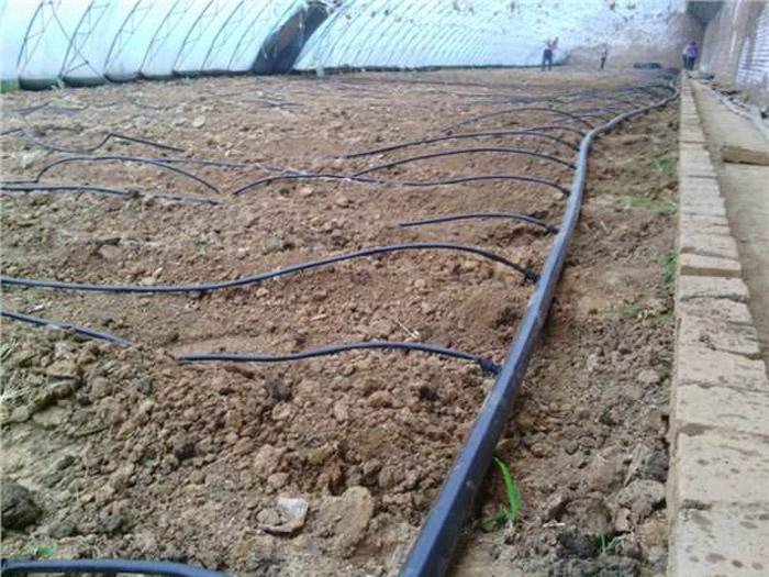 潍坊可靠的滴灌带供应商 青海贴片式滴灌带