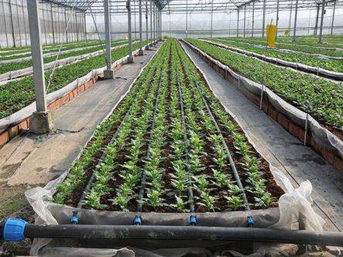 想买新品滴灌带,就到聚暖温室工程 ――贴片式滴灌带制造商