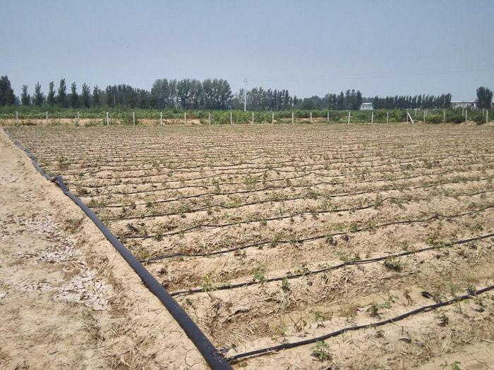 迷宫式滴灌带厂家-供应山东优惠的滴灌带