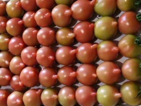 小西紅柿-廣聚果蔬-實力強的供貨廠家|小西紅柿