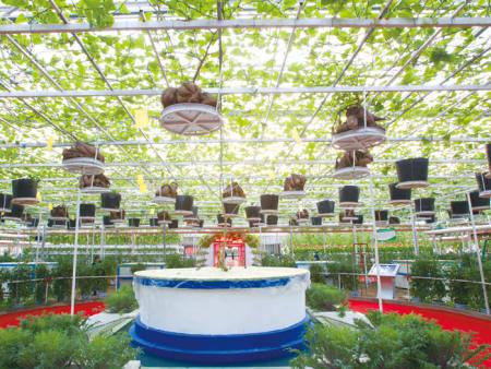室内无土栽培建设-叁圣农业技术服务供应放心的室内无土栽培
