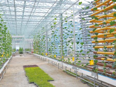 室内无土栽培报价-叁圣农业技术服务供应可靠的室内无土栽培