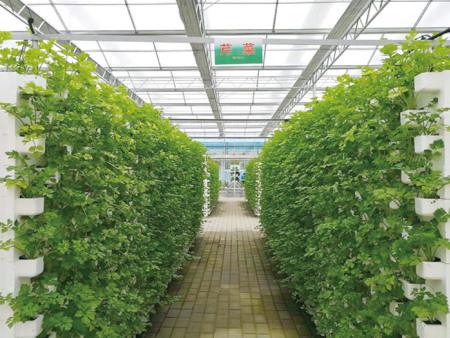 定制室内无土栽培就找寿光叁圣农业技术—室内无土栽培公司