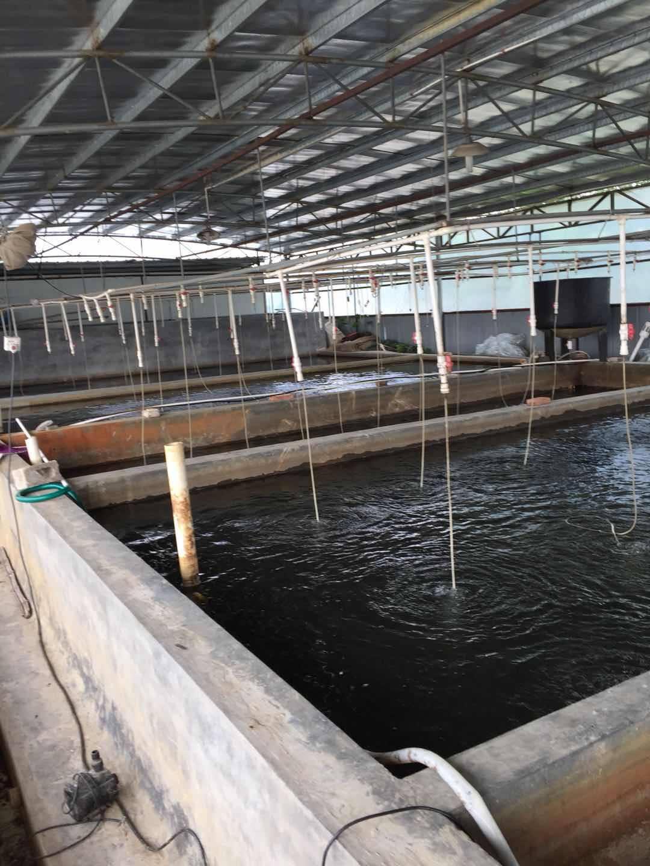广州水产种苗-物超所值的鱼苗富民鱼苗养殖供应