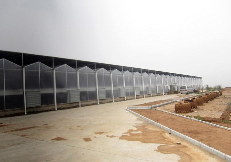 连栋温室建设价格-连栋温室造价是多少
