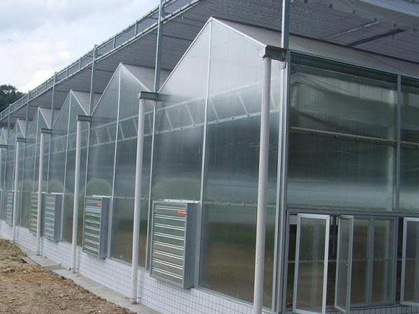 葡萄连栋温室大棚
