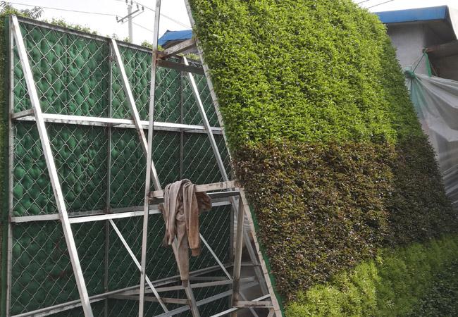 五色草造型,绿雕造型