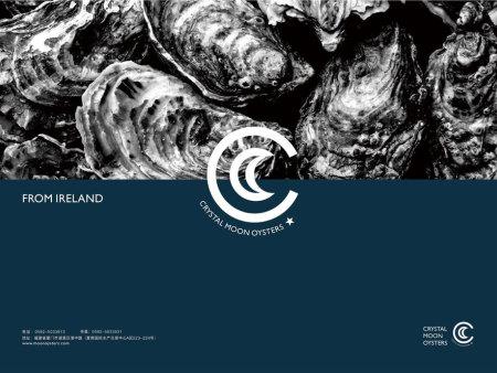 北京白月亮生蚝-哪儿有批发物超所值的生蚝