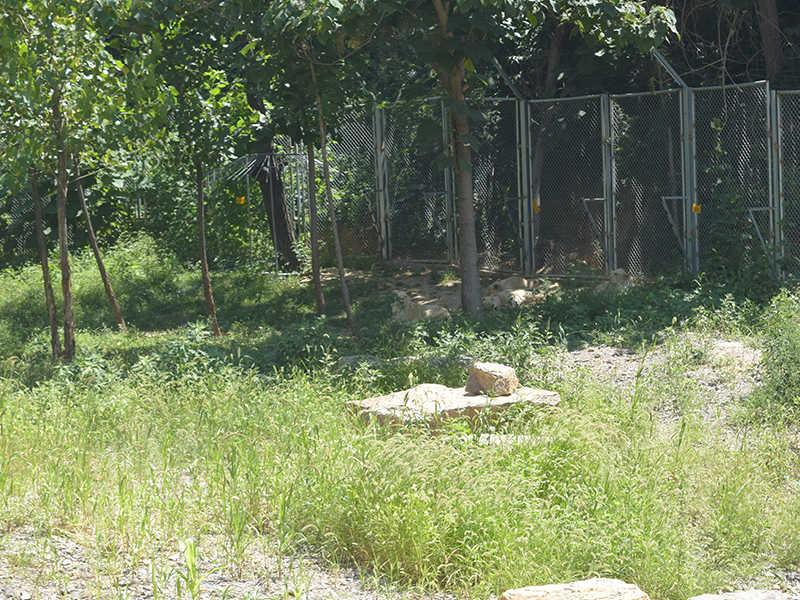 青州动物园哪家好-专业的动物园游玩推荐