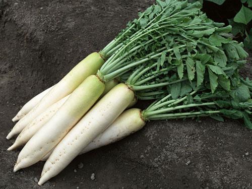 蔬菜配送公司推荐|坪山蔬菜配送