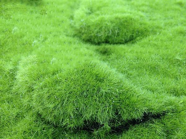仿真塑胶草坪生产厂家-广东不错的仿真塑胶草坪生产基地