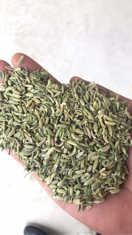 小茴香價格咨詢|小茴香價格行情