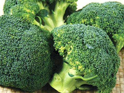 博罗工厂蔬菜配送-声誉好的工厂蔬菜配送公司