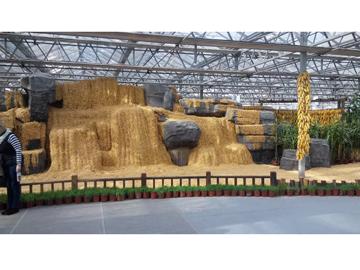 蔬菜种子雕塑制作_哪里有供应做工精湛的蔬菜种子创意雕塑