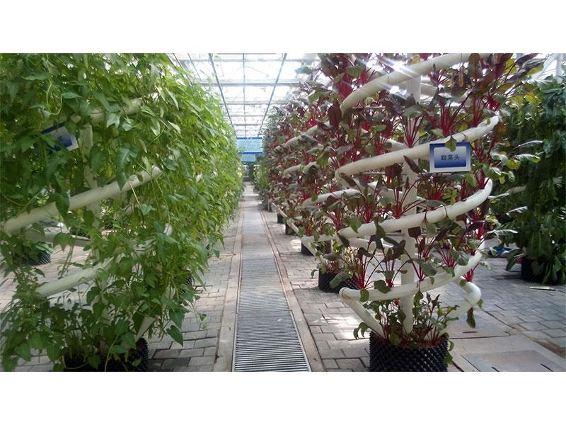 无土栽培项目-山东无土栽培工程现货供应