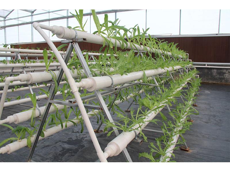 无土栽培蔬菜公司-潍坊物超所值的无土栽培基质供应