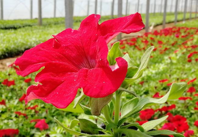 選我有排面 @春季花卉哪里賣+春季花卉上車價