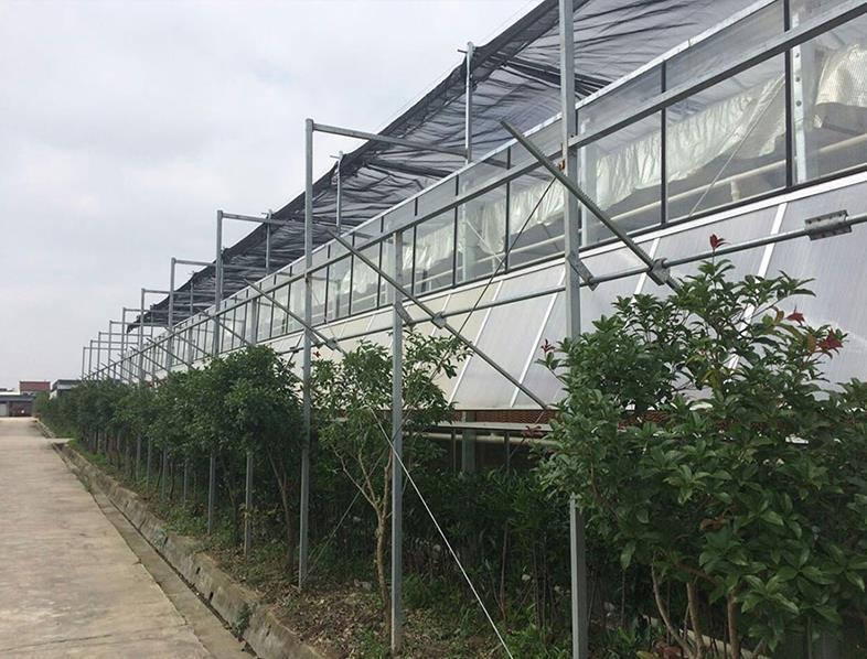 溫室大棚建設-山東高性價溫室大棚