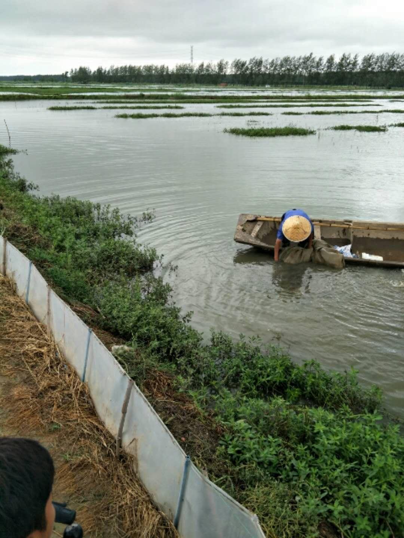 潍坊小龙虾种苗大量供应口碑好的沭淮河龙虾苗