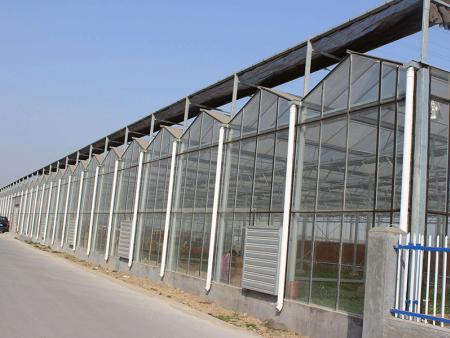 新型温室大棚建造_耐用的新型温室大棚推荐