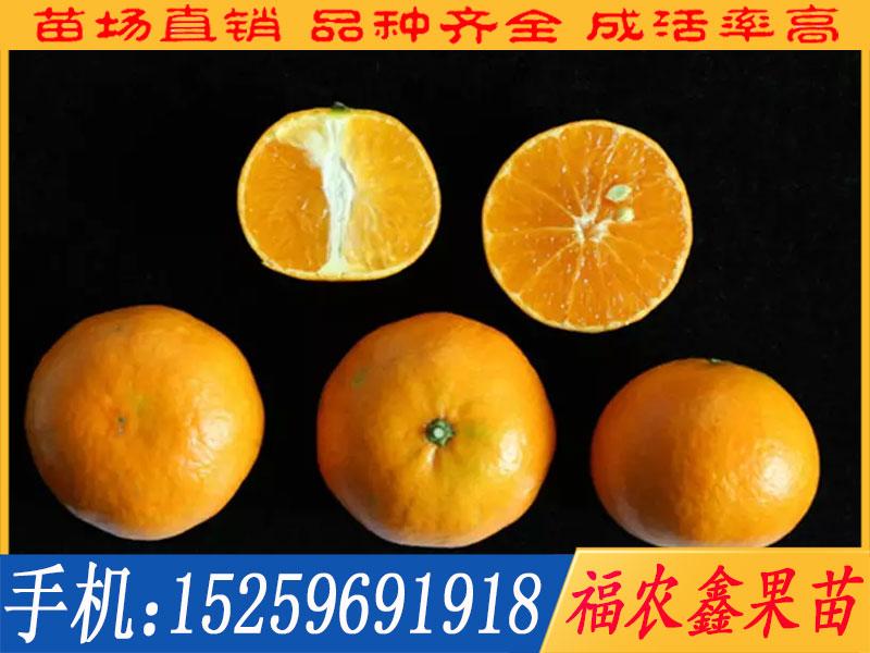 明日见柑橘枝条