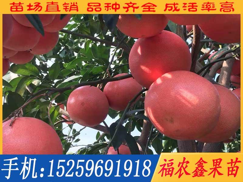 三红甜葡萄柚