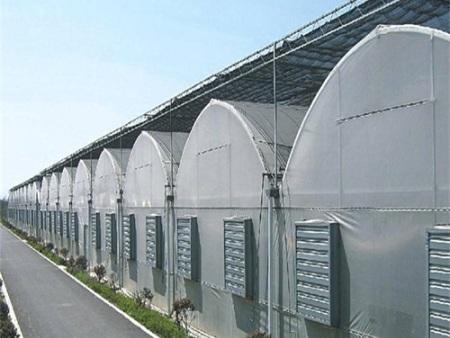 黑龙江花卉薄膜温室|山东优良的花卉薄膜温室