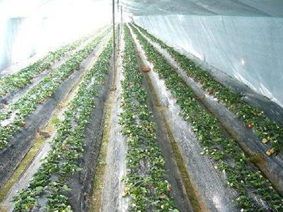 青海地膜生产厂家-优惠的地膜就在兰州金土地塑料