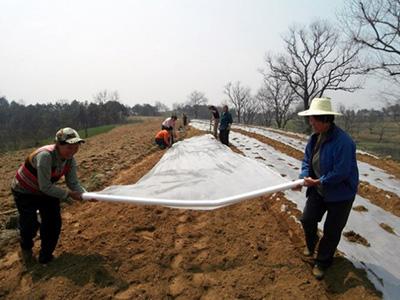 西北地膜-想买满意的地膜就到兰州金土地塑料