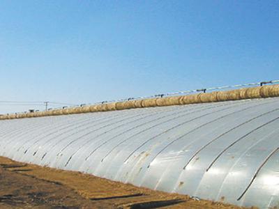西北棚膜生产基地 为您提供优惠的地膜资讯