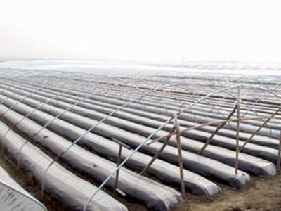 新疆地膜-甘肃地区销量好的地膜