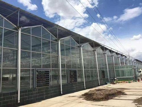 泰安市蔬菜智能温室工程