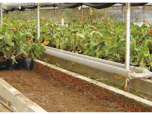 济宁市圆形拱膜花卉温室价格
