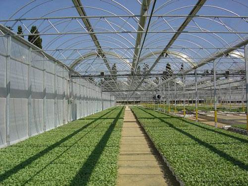 山东潍坊优质的花卉温室【鑫秾温室】智能花卉温室