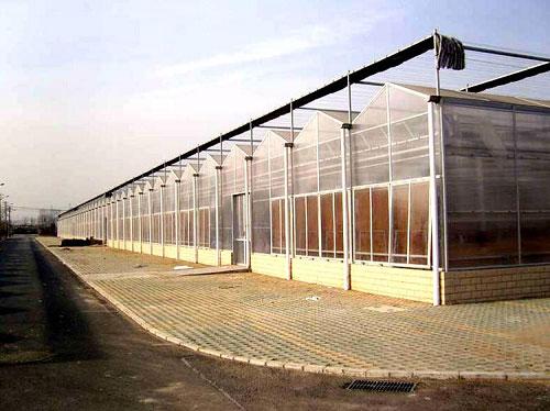 文洛型溫室建造哪家強