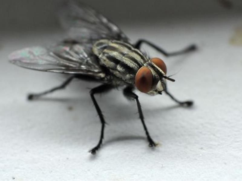 蚶江鎮滅蒼蠅聯系方式|哪兒有實力可靠的蒼蠅滅殺服務