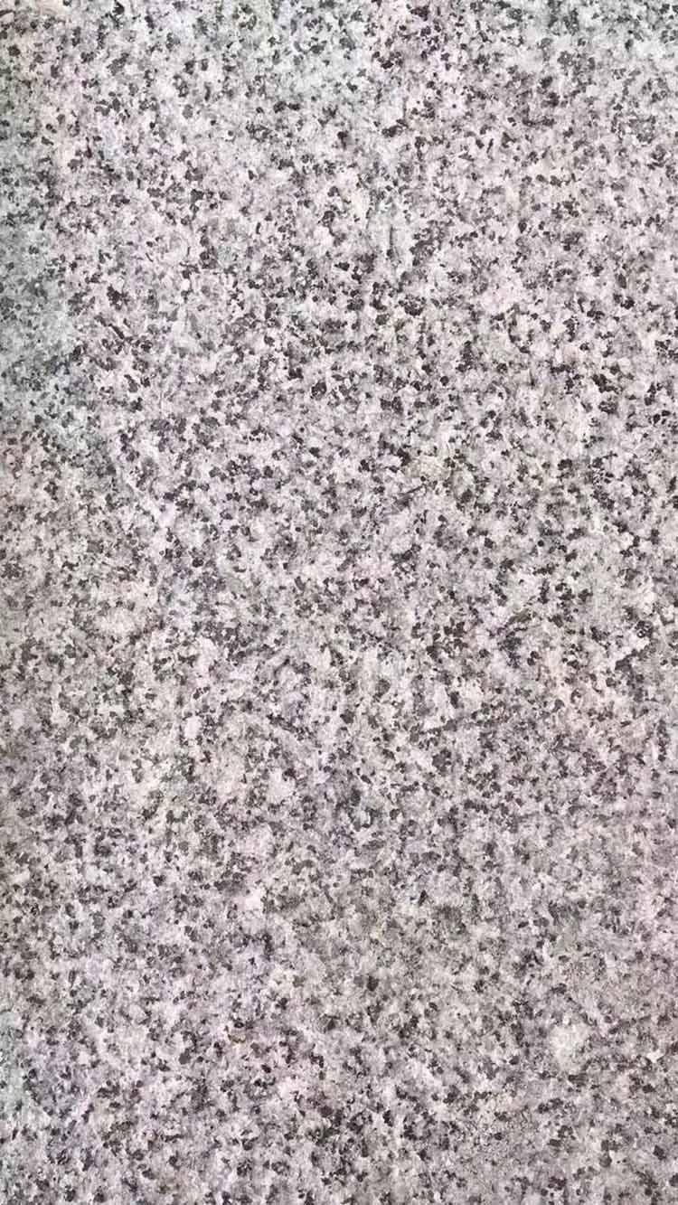 新矿芝麻灰G655石材供应厂家|漳州品质好的新矿芝麻灰G655石材