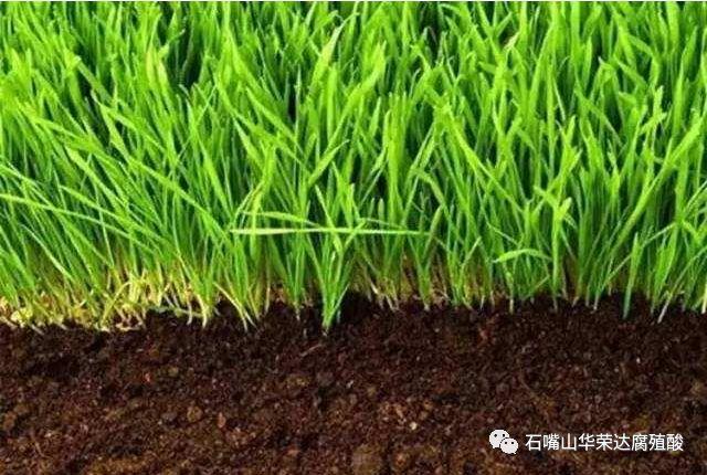 孝感腐植酸肥料|来华荣达工贸,买划算的湖北腐植酸