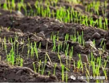 黄石腐植酸肥料-哪里有提供品质高的湖北腐植酸