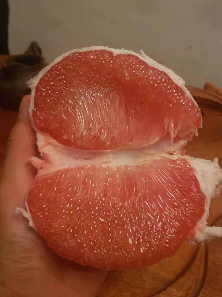 供應福建成活率高的泰國紅寶石青柚苗 泰國紅寶石青柚苗信息