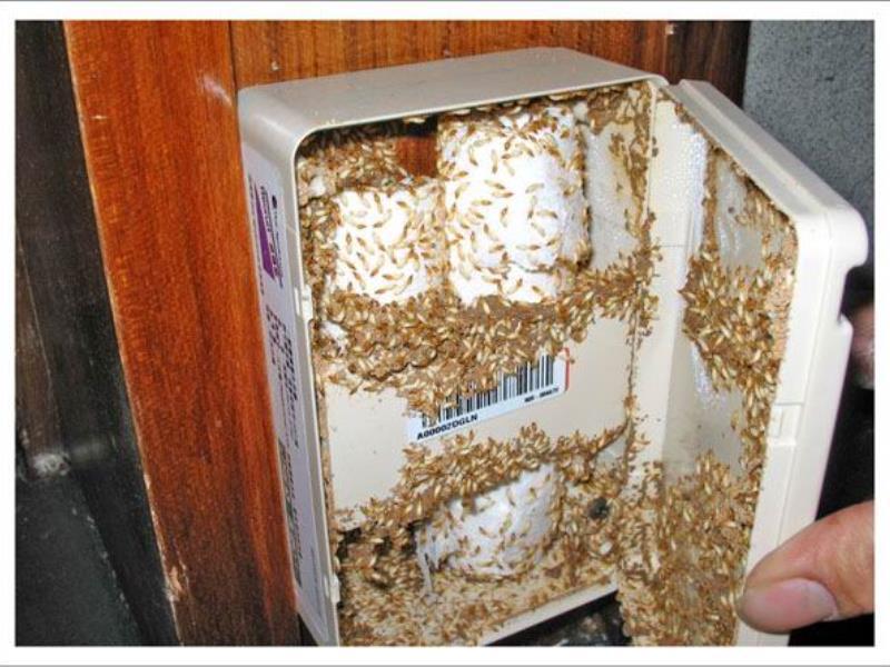 白蚁防治服务_靠谱的泉州杀白蚁优选宏大白蚁防治