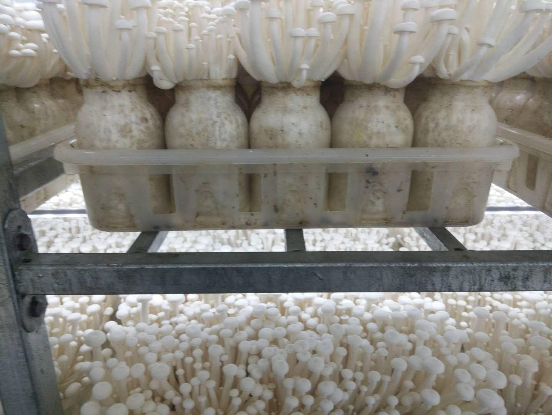 工厂化食用菌层架-重庆食药菌网架价格