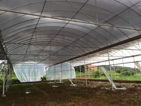 连栋薄膜温室建造|连栋薄膜温室就选启帆温室工程